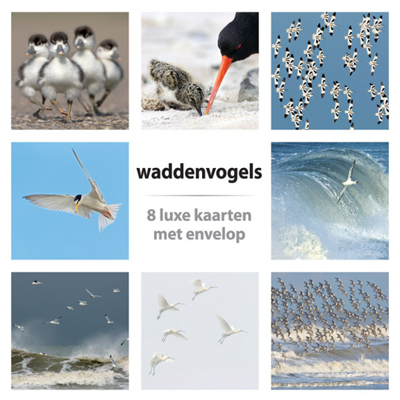 Kaartenset Waddenvogels