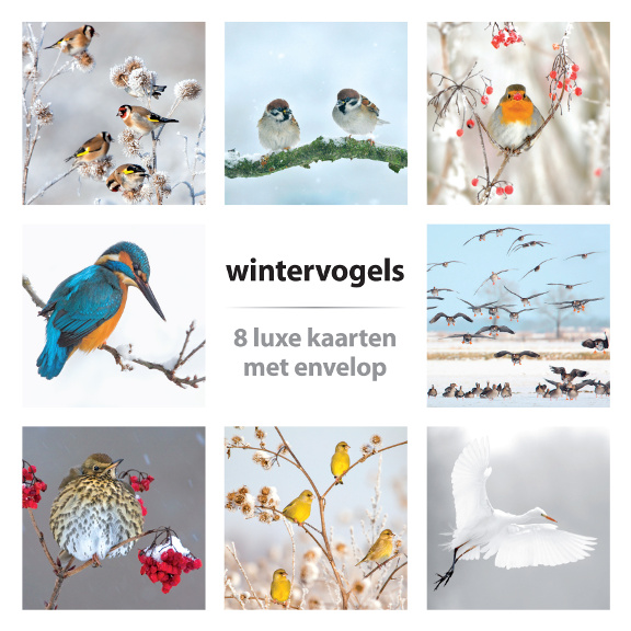 Kaartenset Wintervogels