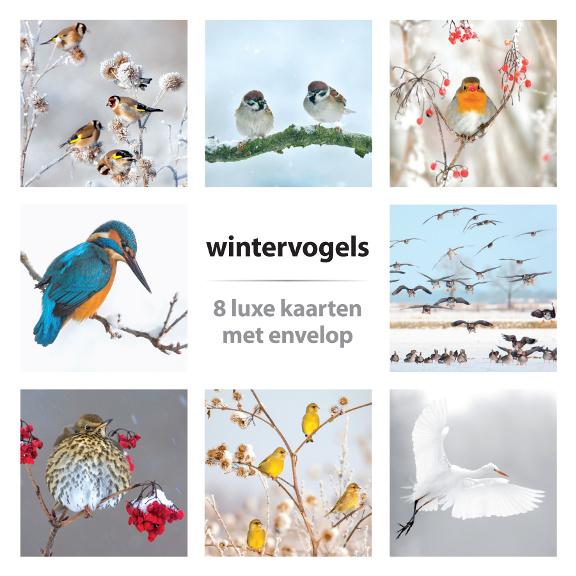 Kaartenset Wintervogels
