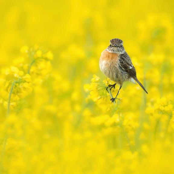 Cursus Vogelfotografie