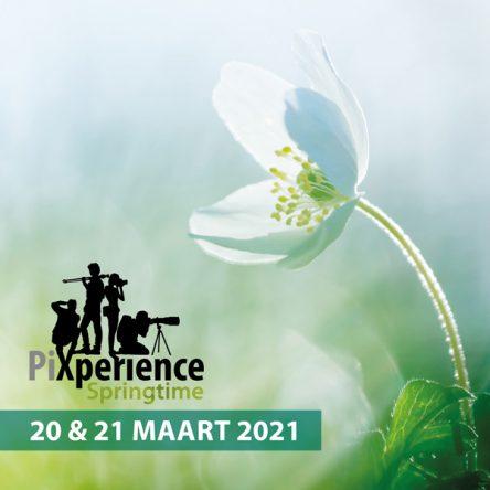 PiXperience Springtime online zondag 21 maart