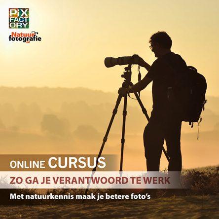 Online cursus: Zo ga je verantwoord te werk