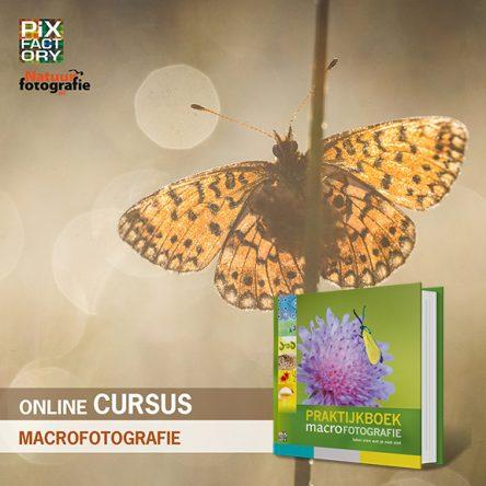 Combideal: online cursus & praktijkboek macrofotografie