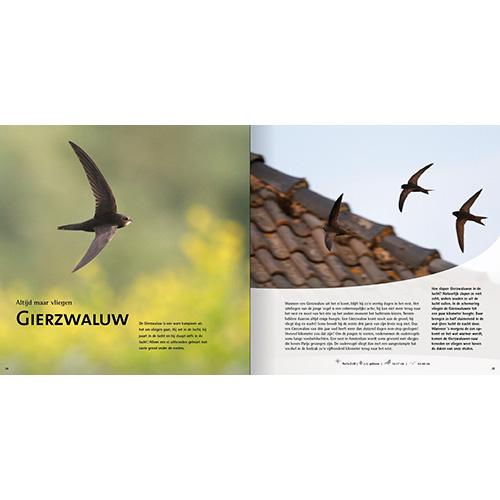 Vogels van tuin, park en stad