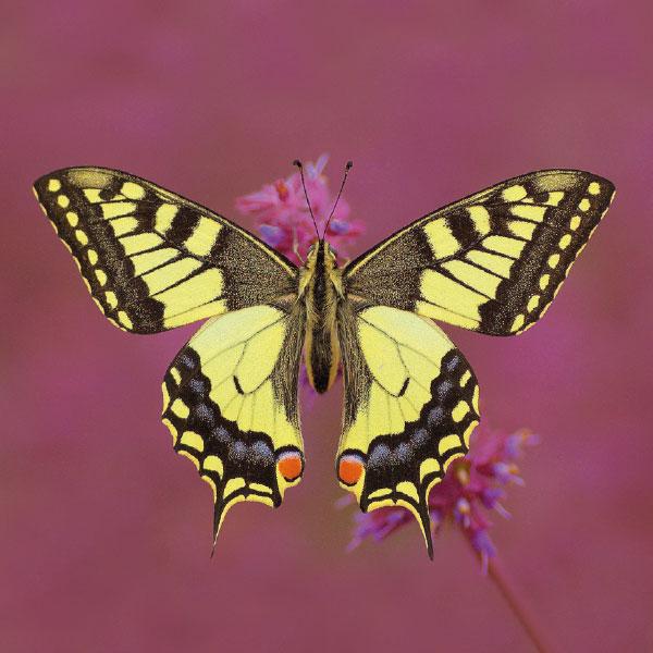 Kaartenset Vlinders & Libellen