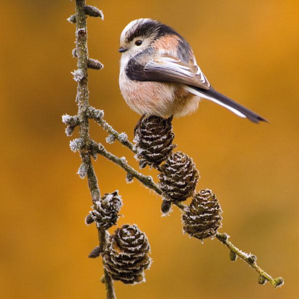 Kaartenset Tuinvogels
